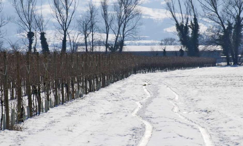 vigne_inverno
